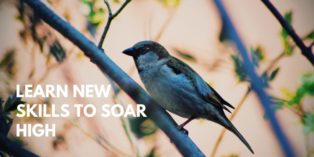 Learn new skills to soar high.